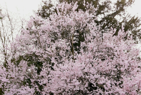 cropped blossom