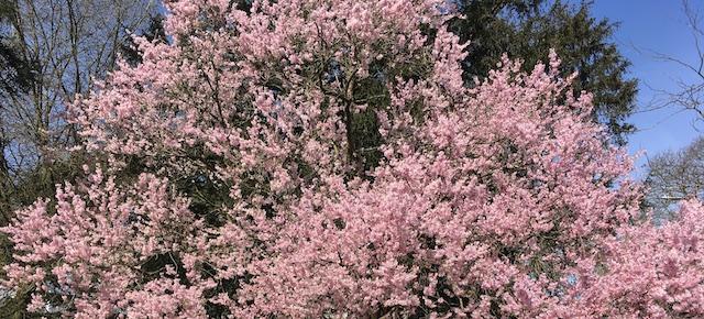 smaller blossom